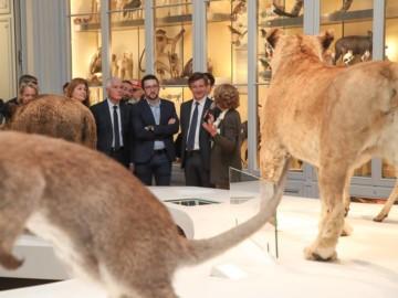 Les Bordelais redécouvrent leur Muséum